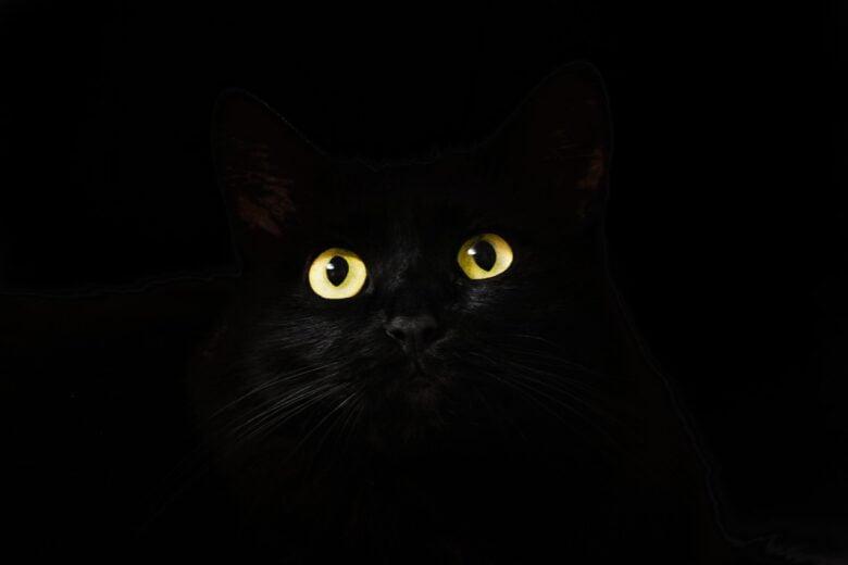 はてなブログに「ミサワブラック!!」というサブブログを作りました。